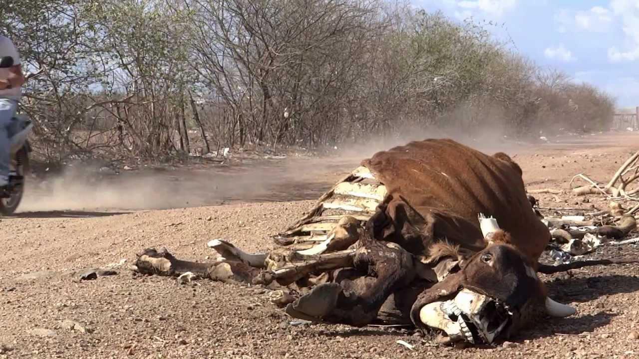 Legado da seca no interior da Paraíba (Foto: Arquivo/YouTube)